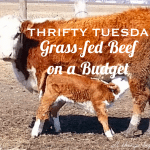 Thrifty Tuesday: Buying Grass-Fed Meat in Bulk