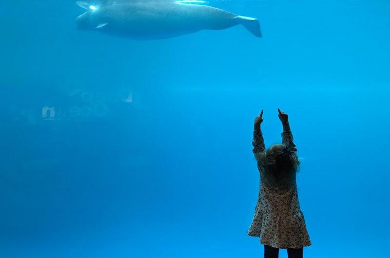 Shedd Aquarium Hours Friday