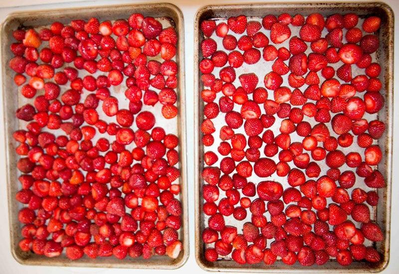 strawberry-picking-10