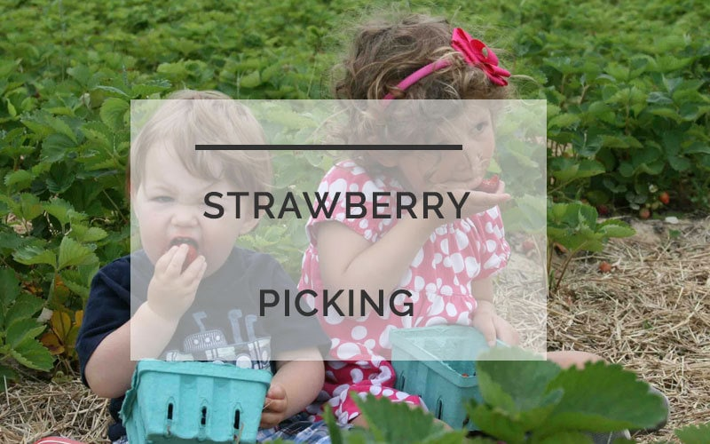 Strawberry Picking With Kids: The Ultimate Guide to Everything You Need to Know