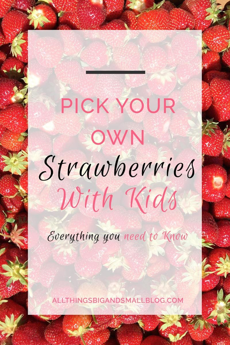Strawberry Picking with Kids- Pick your own strawberries with kids. How to find U-Pick Fruit with toddler and baby. READ AND REPIN for more mom hacks and tips from All Things Big and Small Blog!
